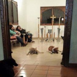 Tanti cani randagi arrivano improvvisamente al funerale di una donna a Yucatan…