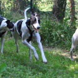 Conosciamo il mondo e gli altri cani, insieme, divertendoci. Stage intensivo con Ivano Vitalini. 13 e 14 giugno