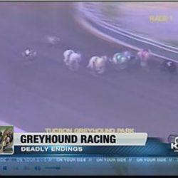 Grey muore a Tucson Greyhound Park, la pista Killer dell'Arizona