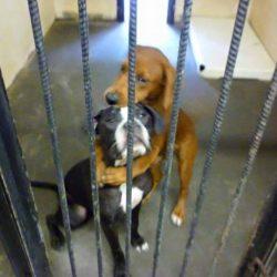 USA: due cani si abbracciano prima di essere soppressi ma…