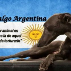 LETTER FROM PET LEVRIERI TO THE SENATE OF ARGENTINA