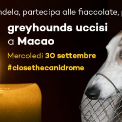 Please light a candle and join a torchlight procession for the thousands of greyhounds killed at Macao.