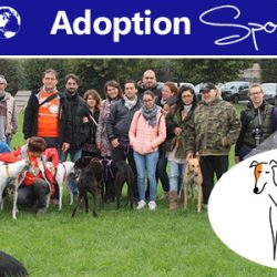 Thanks GREY2KUSA Worldwide – Adoption Spotlight