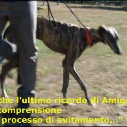 Rai2: proteggi i nostri cani dai metodi coercitivi di Cesar Millan, addestratore violento