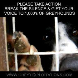 UK – La DEFRA ha lanciato una consultazione pubblica in materia di  tutela e benessere dei greyhound da corsa