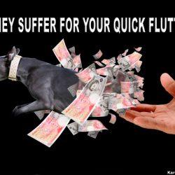 I Bookmakers/Allibratori nel greyhound racing – Chi sono.