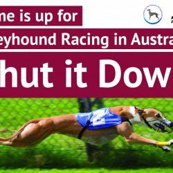 Australia – Greens, Animal Justice Party e Socialist Alliance favorevoli alla chiusura del greyhound racing