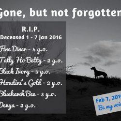 Ottimo lavoro nel cinodromo di Victoria – 6 cani morti sulle piste…solo nella prima settimana di quest'anno