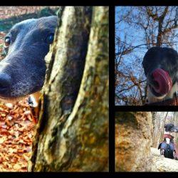 Hugo e .. la natura