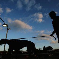 """""""Greyhound racing: dovete comportatevi meglio"""" – La Commissione del Parlamento irlandese dice che l'Industria è celebre per la sua disonestà"""