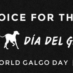 Primo febbraio. Il giorno internazionale del galgo. Dia del galgo
