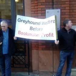 Bufera su GBGB, l'ente corse inglese – L'associazione dei trainer protesta per la mancanza di trasparenza economica della GBGB