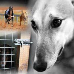 Il settore corse dei Greyhound del West Virginia vacilla e potrebbe essere agli sgoccioli.