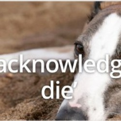 BRITISH MPS AND MEDIA CONDEMN THE RACING INDUSTRY OVER GREYHOUND DEATHS