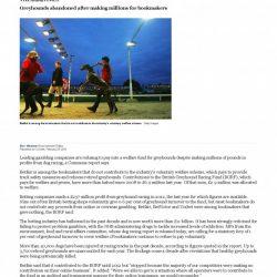 THE TIMES (UK): Greyhound abbandonati dopo aver fruttato milioni di sterline per gli allibratori