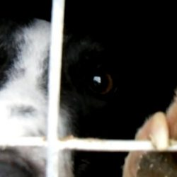 Protect Racing Greyhounds in Great Britain