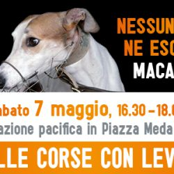 JOIN OUR PEACEFUL PROTEST AGAINST THE EXPORT OF IRISH GREYHOUNDS TO CHINA! Saturday 7th May, Milan, 16.30