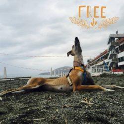 Al Porto Antico il 2 giugno, alle ore 17, Pet Levrieri in difesa dei greyhound irlandesi!
