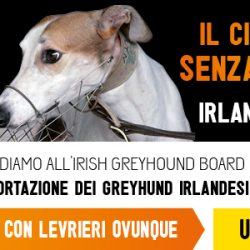 Chiediamo TUTTI INSIEME all'IGB di VIETARE E PUNIRE l'esportazione di greyhound a Macao- Inviate la mail.