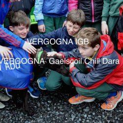 IGB e Gaelscoil Chill Dara, vergogna!