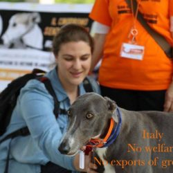 "Noi diciamo: ""No Welfare, NO esportazione di greyhound!"""