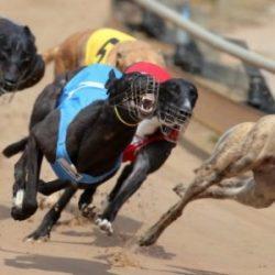 TANG SHEN – Un altro Greyhound cade …un'altra vita spezzata