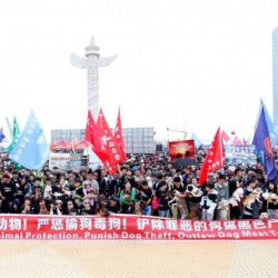 More than 100,000 Chinese Citizens Rally Together to Protest the Dog Meat Trade