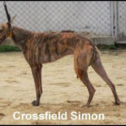 I 29 greyhound irlandesi finiti a Macao per correre e per morire. Ecco i loro nomi e la loro storia