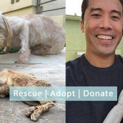 Appello della The Animal Hope & Wellness Foundation, che ha già salvato mille cani destinati al macello del Festival di Yulin