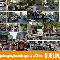 ANIMA Macau,  GREY2K USA Worldwide, Limerick Animal Welfare, Greyt Exploitations,  CAGED northwest, Pet levrieri, Animals Australia at ARAN's protest in Dublin.