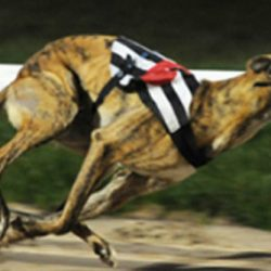 Please sign Petition to Irish Government: Stop Giving Millions of Euro to Cruel Greyhound Industry