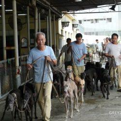 Aiutiamo Anima Macau a salvare i greyhound del Canidrome – Lettera all'AD e al Segretario per l'Economia e la Finanza
