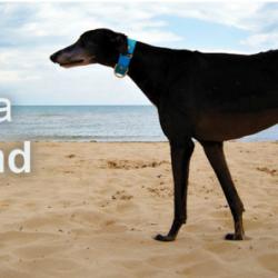 19 oratori da tutti il mondo, tra cui il presidente di Pet levrieri, alla conferenza mondiale Greyhounds Around the Globe – 15 ottobre, Florida