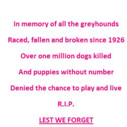 Ha vinto la versione ROSA per la targa commemorativa del Monumento ai Greyhound sterminati dal greyhound racing