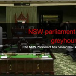Data storica: 23 agosto. Il Parlamento del New South Wales approva la legge che vieta il greyhound racing