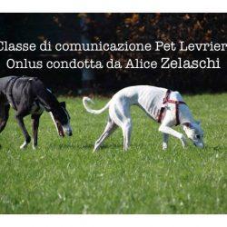 Classe comunicativa PetLevrieri Onlus condotta da Alice Zelaschi