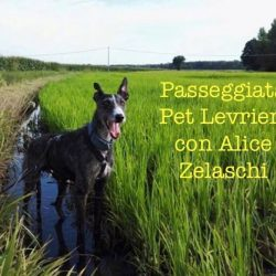 Passeggiata e socializzazione Pet Levrieri con Alice Zelaschi