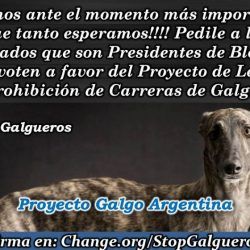 Pet Levrieri appeals to the Argentinian Parliament to ban greyhound racing