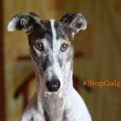 """Facciamo arrivare ai deputati argentini una moltitudine di """"#StopGalgueros"""". Leggete come fare."""