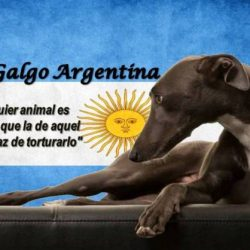 Pet levrieri appeals to the Penal Commission of Deputees of Argentina TO BAN GREYHOUND RACING