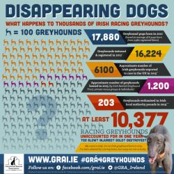 I greyhound irlandesi svaniscono nel vento?
