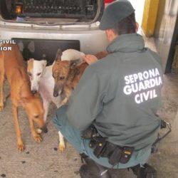Siviglia: getta tre galgo vivi in un pozzo perché non gli servono più
