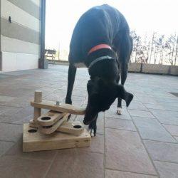 Leggende metropolitane sui greyhound, e i levrieri, rescue