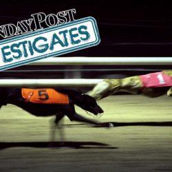 Sunday Post Investigates – Gli oscuri segreti delle corse dei levrieri, dove I cani sono drogati e le gare truccate