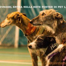 Greyhound, Lurcher e Galgo, già in Italia, in cerca di casa!