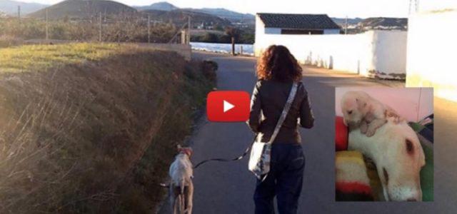 'Spagna: una mamma salva i suoi dieci cuccioli' a firma di Paola Iotti su Caffèbook – Da Leggere.