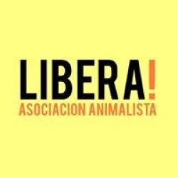 Anche in Uruguay si protesta!