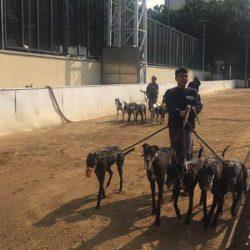 La vita di inferno dei greyhound a Macao