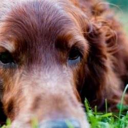 Aiuto, il mio cane ha la diarrea! di Elena Garella