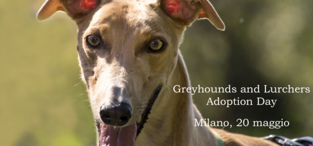 GREYHOUNDS AND LURCHERS ADOPTION DAY – Milano, 20 Maggio
